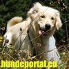 Hundeportal.eu