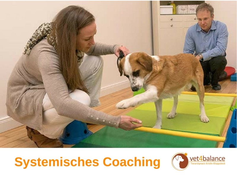 vet4balance-6-Systemisches-Coaching-1