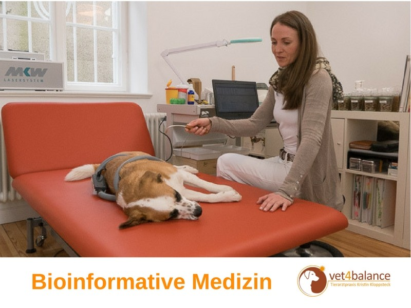 vet4balance_3_bioinformative_medizin