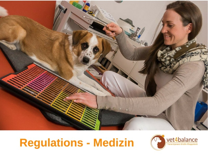 vet4balance_4_Regulationsmedizin