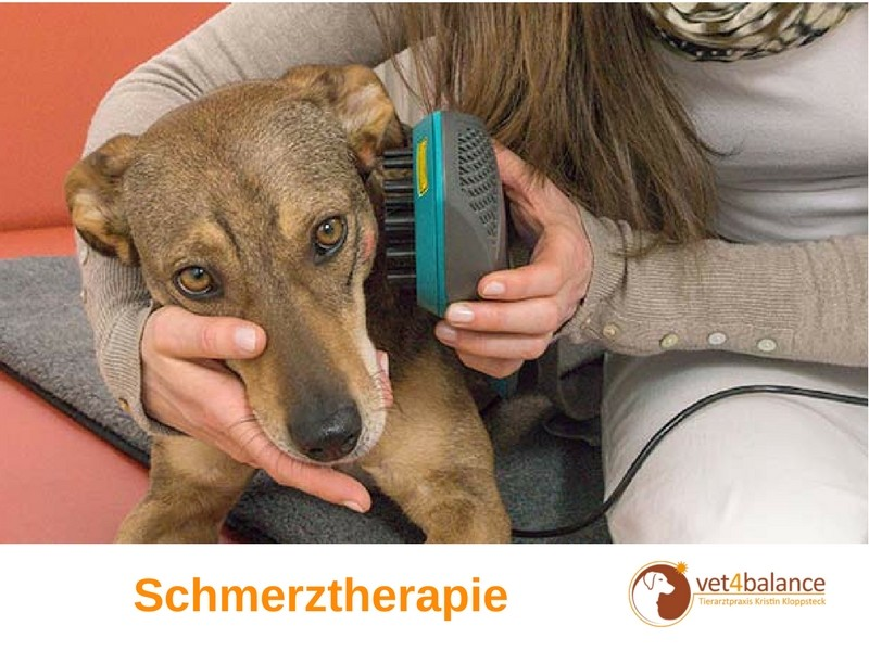 vet4balance_5_schmerztherapie
